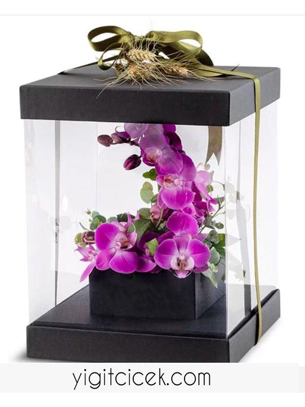 kutuda mor orkide