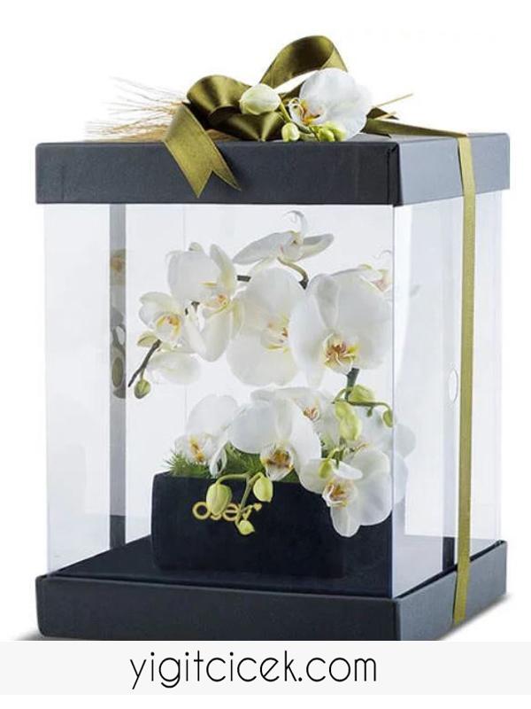 kutuda beyaz orkide